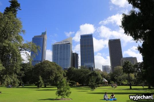 01 Sydney - ogrod botaniczny