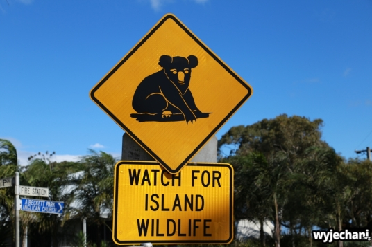 04 Raymond Island - koala znak