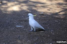 05 zwierz - GOR - papuga