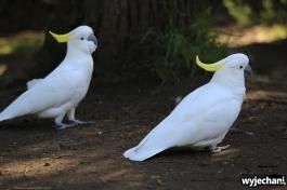 06 zwierz - GOR - papuga