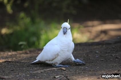 07 zwierz - GOR - papuga