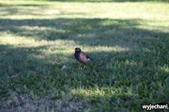 20 zwierz - Townsville - ptak