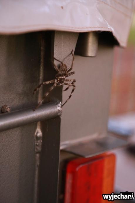22 zwierz - Townsville - pajak