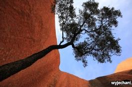 33 Outback cz.1 - Uluru - Mala Walk