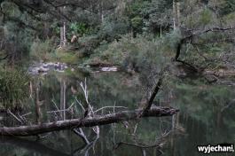 02 Eungella NP - Broken River