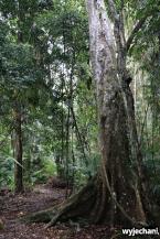 02 Kuranda - spacer po lesie deszczowym