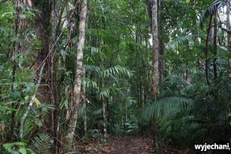 03 Kuranda - spacer po lesie deszczowym