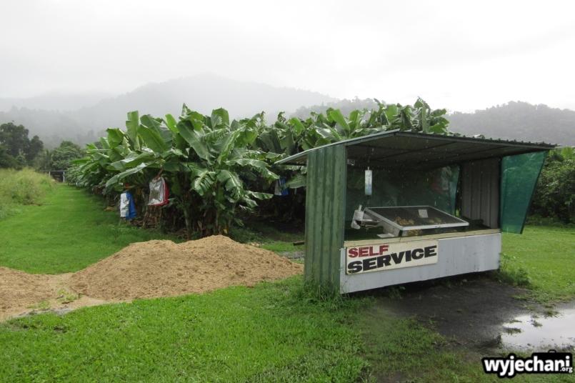 05 Etty Bay - okoliczna plantacja bananow ze sklepikiem samoobslugowym