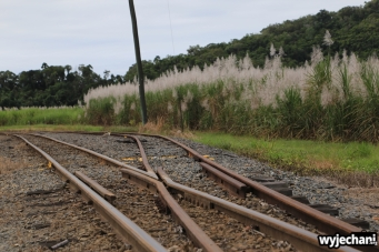 06 Kuranda - okolice - plantacja trzciny cukrowej