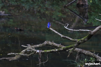 18 Eungella NP - zwierz - ptak