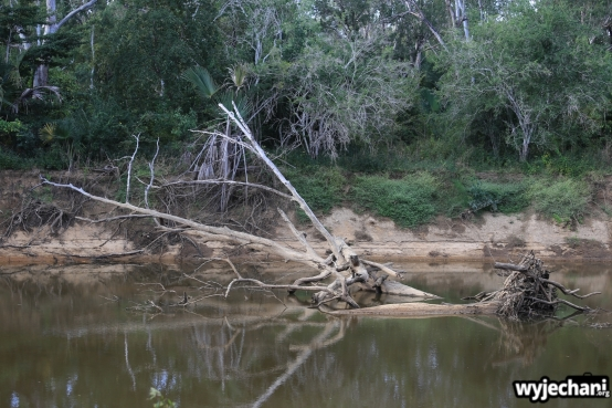 20 Cape York - PN - Lakefield NP - 12 Mile Lagoon