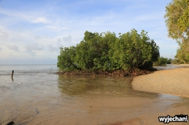 37 Cape York - inne miejsca - Elim Beach