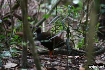 05 zwierz - ptak