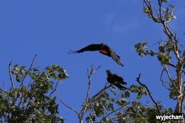 14 zwierz - papugi