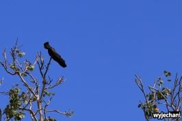 15 zwierz - papuga