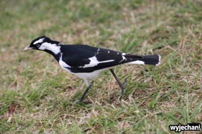 23 zwierz - ptak