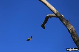 03-zwierz-ptaszek