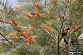 04-zwierz-papugi