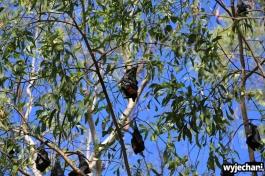 06-zwierz-nietoperze
