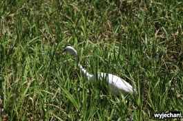 07-zwierz-ptak