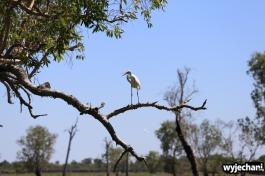 08-zwierz-ptak