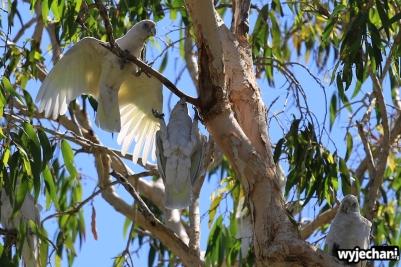 10-zwierz-papugi