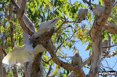 11-zwierz-papugi