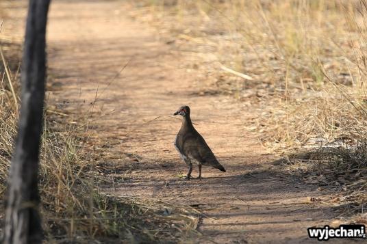 12-zwierz-ptak