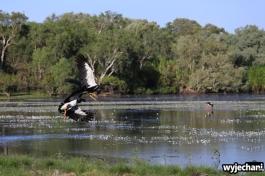 13-zwierz-ptaki