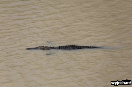 20-zwierz-krokodyl