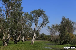 21-kakadu-np-yellow-water-wetland