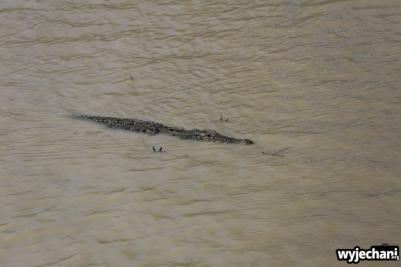 21-zwierz-krokodyl