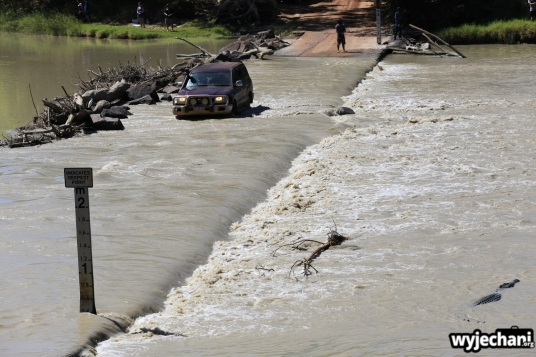 23-zwierz-krokodyl-na-mostku-z-samochodzikiem