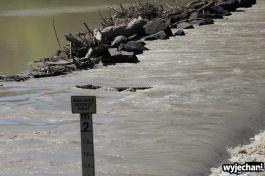 24-zwierz-krokodyl-na-mostku