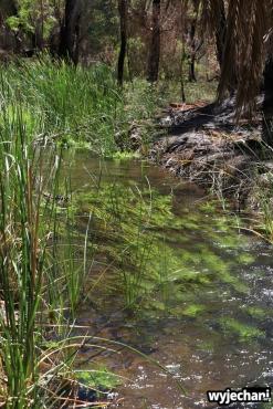 05-pilbara-pn-millstream-chichester-millstream-wetlands