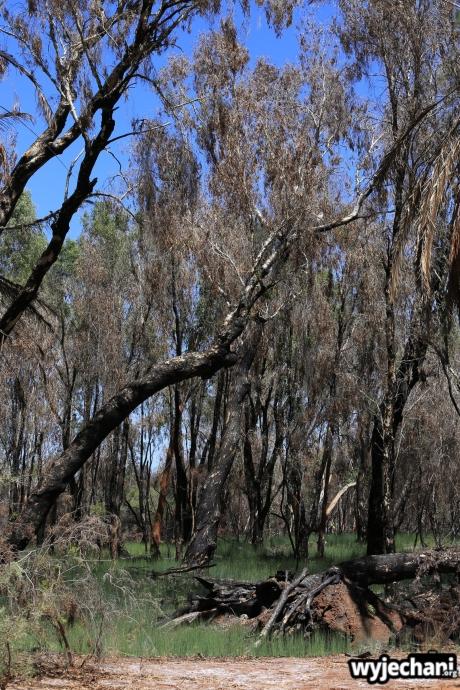 06-pilbara-pn-millstream-chichester-millstream-wetlands