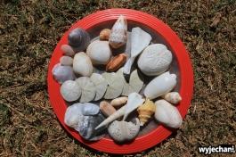 76-kimberley-80-mile-beach-muszelki-przyniesione-z-plazy-przy-80-mile-beach-caravan-park