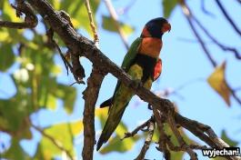 01-zwierz-papuga
