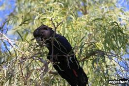 04-zwierz-papuga