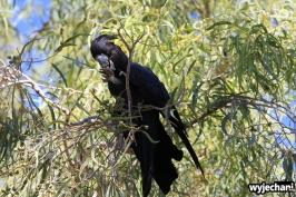 05-zwierz-papuga