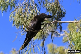 06-zwierz-papuga