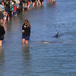 09-zwierz-delfin-monkey-mia