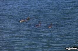 11-zwierz-delfin-monkey-mia