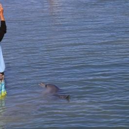 13-zwierz-delfin-monkey-mia