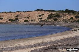 14-zwierz-emu-shark-bay