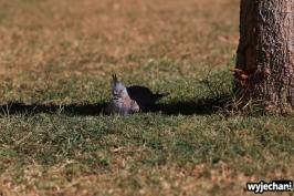 19-zwierz-golabek