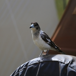 24-zwierz-ptak-lake-indoon