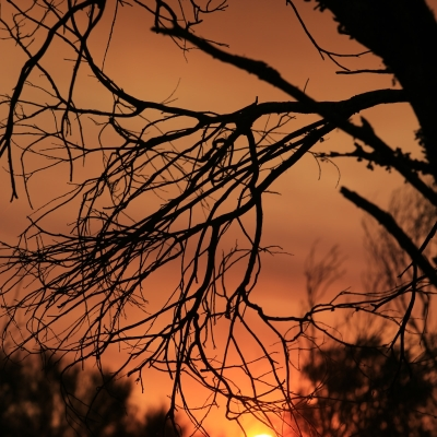 01-dryandra-forest-park-sunset