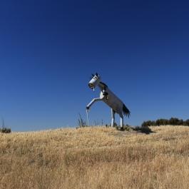 08-tin-horse-highway