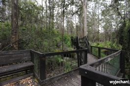 103-pn-shannon-snake-gully-boardwalk